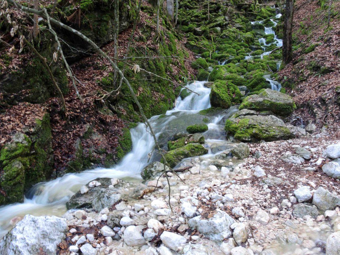 Sprudelnder Gebirgsbach vom Untersberg, daneben die Quelle am Veitlbruch
